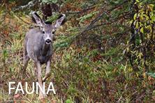 Galería Fauna