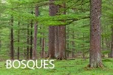 Galería Bosques